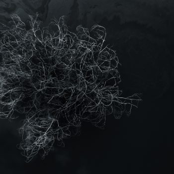 photodumois-aout-expansion