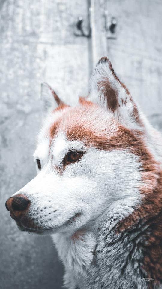 Photographe-canin-maxime-arnaudet-2