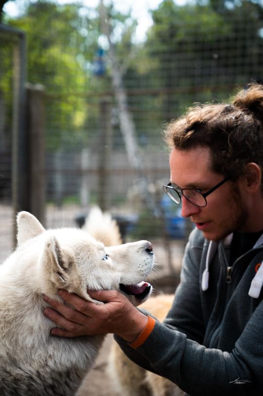 Photographe-canin-maxime-arnaudet-husky-2