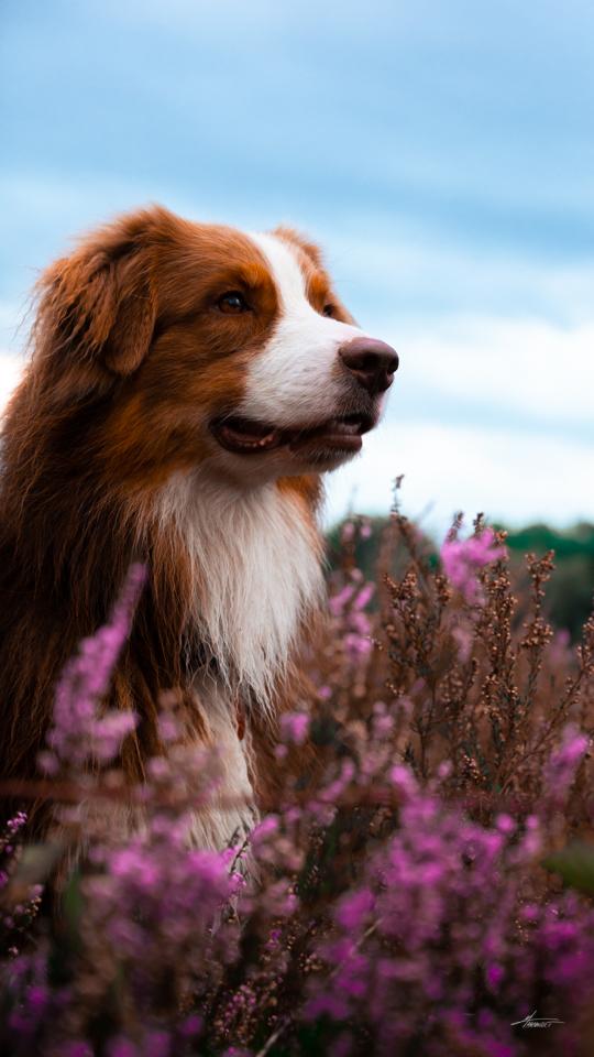 Photographe-canin-maxime-arnaudet-6